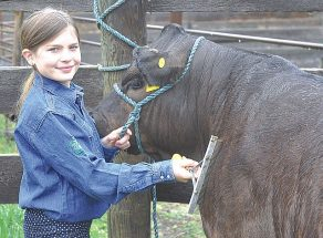 4-H students gearing up for Achievement Day