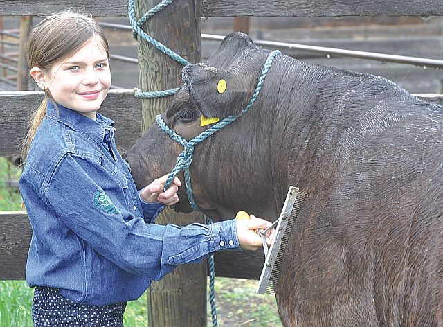 Mackenzie Plante has named her Limousin steers Black Ice. She is a first-year Kinuso Lakeside 4-H Club member and beef club historian.
