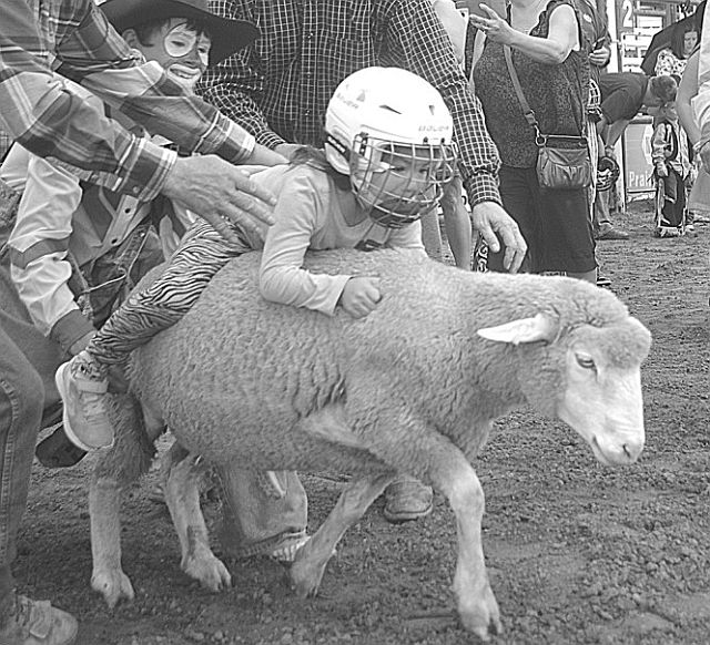 Danessa Lamouche of Sucker Creek, holds on tight during mutton bustin' at the rodeo.