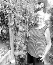 PIC – Queen of the Tomatoe