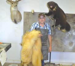 Prepare your big game well for taxidermist