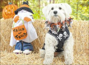 Protect your pets against a spooky Halloween