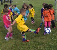 PICs – Soccer players get final kick at the cat