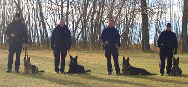 RCMP dogs get trained to detect human remains