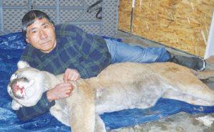 Salt Prairie trapper snares cougar