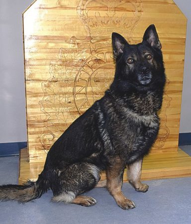 RCMP Dog Services provide valuable tool