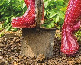 Preparing garden beds for spring and beyond