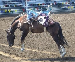 PICs – Thrills and spills highlight rodeo