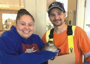 Joussard students rescue a very cold duck