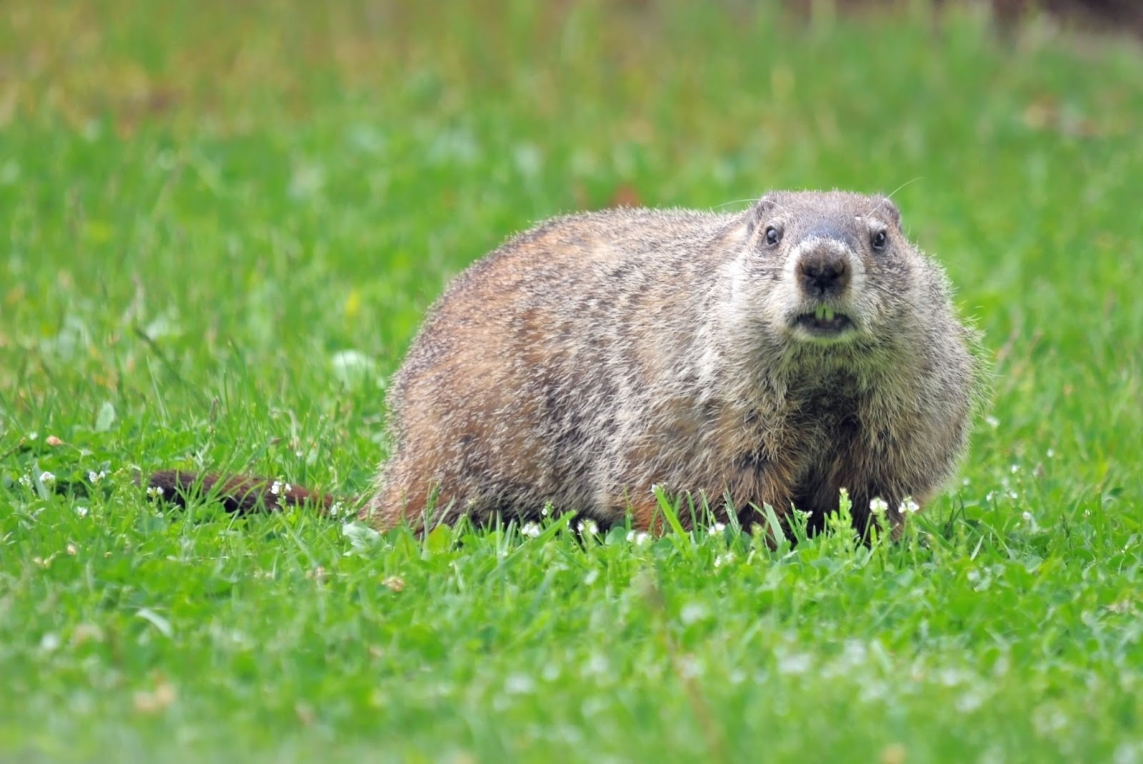 This image has an empty alt attribute; its file name is Groundhog03.jpg